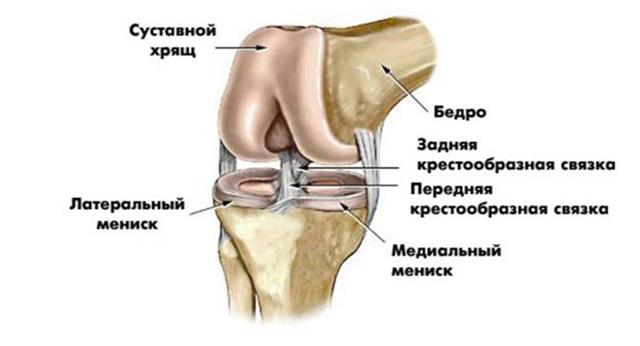 УЗД колінного суглоба: що показує, показання, як проходить процедура