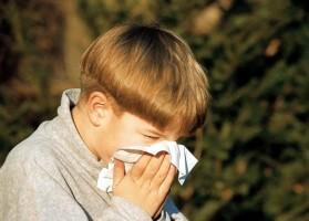 Поліноз - що це таке: симптоми і лікування у дорослих і дітей