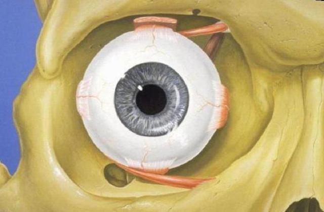 Акомодація ока: її порушення, обсяг, що собою являє, лікування
